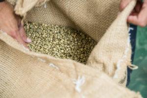 Caffè crudo come arriva dalle piantagioni